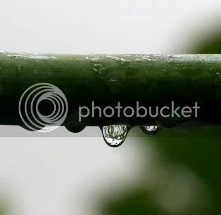 Butir Hujan