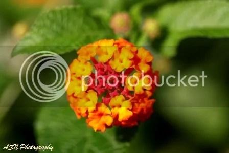 Bunga di Halaman Rumah 05, Halaman Belakang Rumah, Jakarta, 29 September 2011, pukul 09.08 WIB