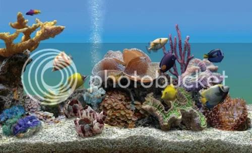 Marine Aquarium 3.0 với key bản quyền miễn phí