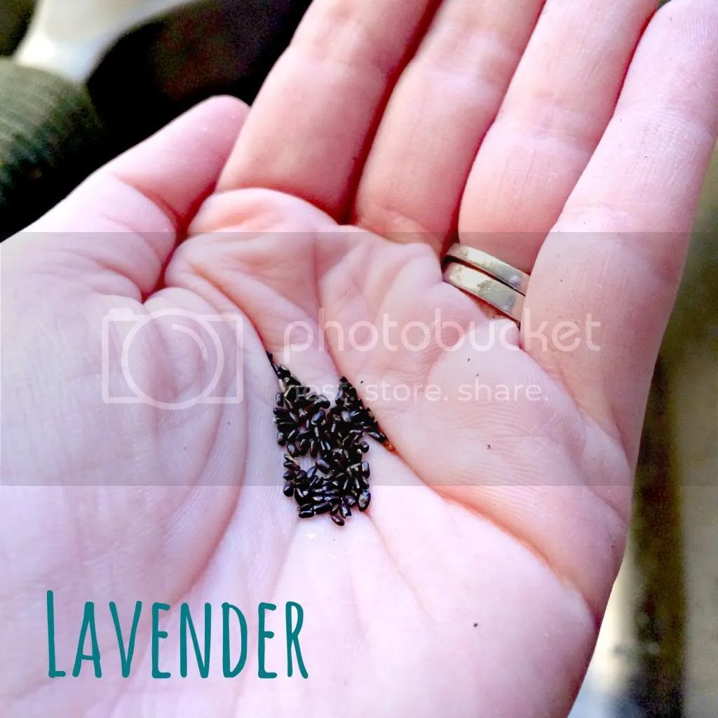 lavender, tea, seeds