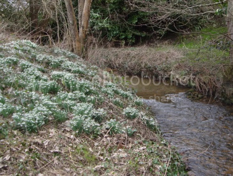 How to Become a Snowdrop Collector
