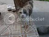 photo 4699_zps7c744021.jpg