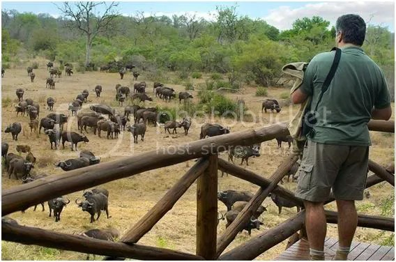 kruger national park entrance fee 2013