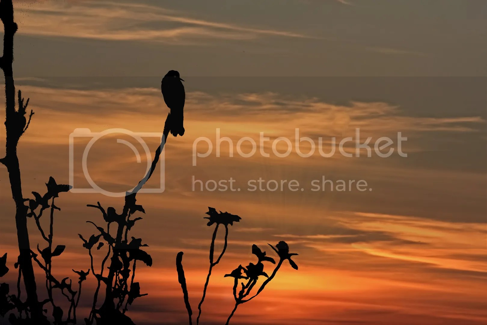 bird wing photo: A bird in the tree at sunset abirdinthetreeatsunset.jpg