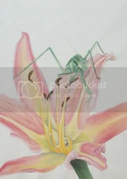 mantis watercolor