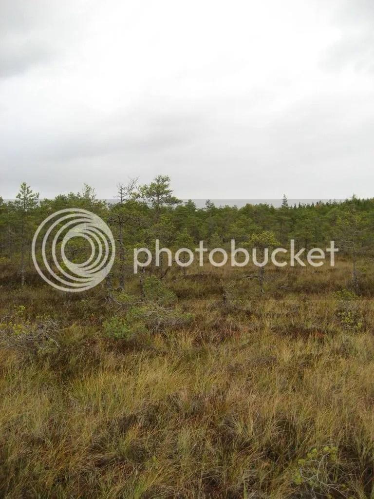 photo Valkmusan kansallispuisto 0916-13_zpscyxry26f.jpg