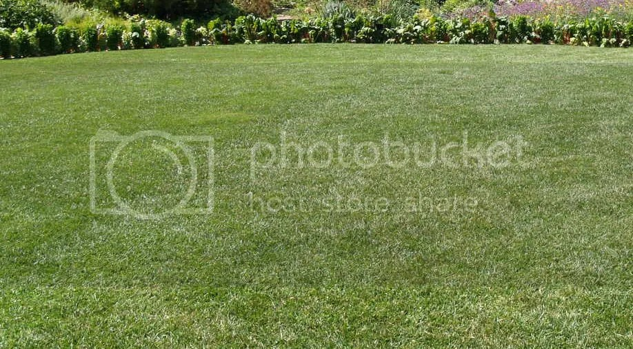 photo PerfectLawn_zps4db347d5.jpg