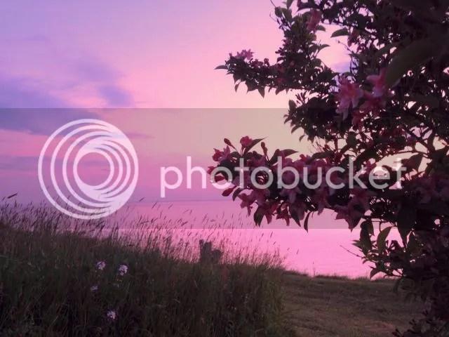 photo IMG_1700-----pink.jpg