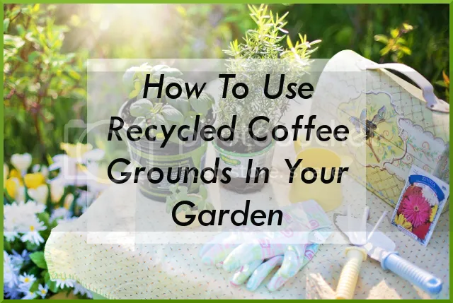 photo How to Use Recycled Coffee Grounds In Your Garden_zpsi0is5owm.png