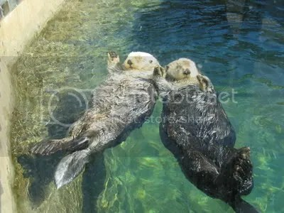 otters photo: otters holding hands otters.jpg