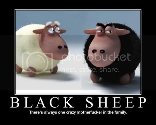 black sheep Pictures, Images and Photos