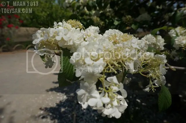 photo DSC00488.jpg