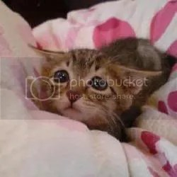 sad cat Pictures, Images and Photos