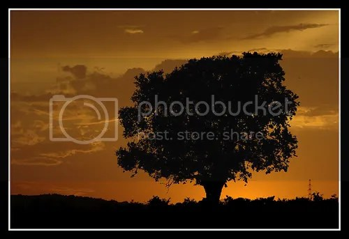 Tree Silhouette Pictures, Images and Photos
