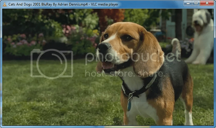 Download Cats And Dogs 2001 BluRay By Adrian Dennis Torrent ...