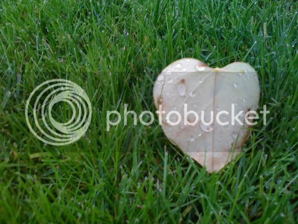 Fallen leaves giving helpful reminders of love.