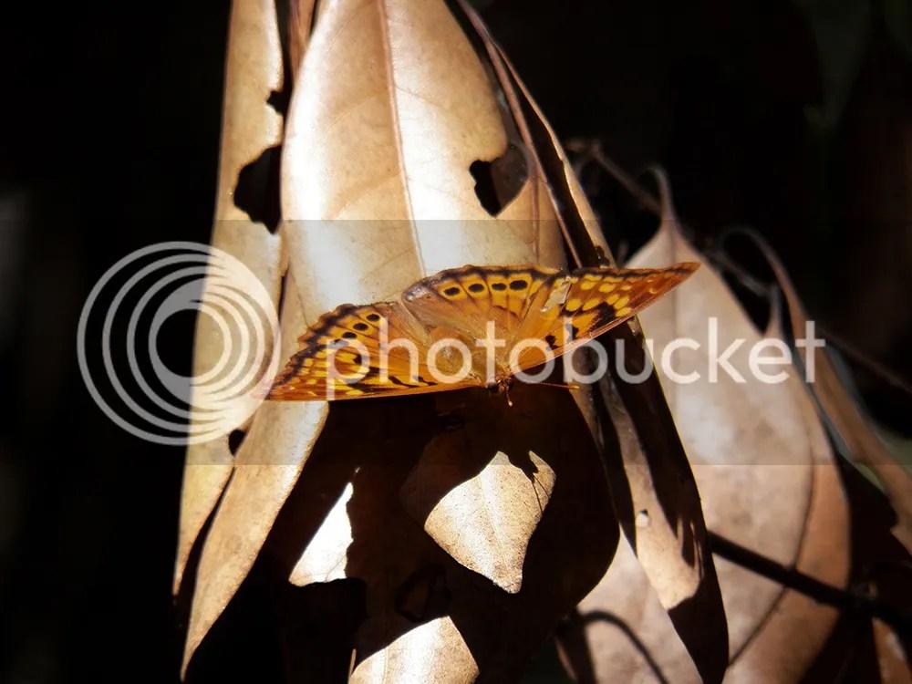 photo orange-butterfly.jpg
