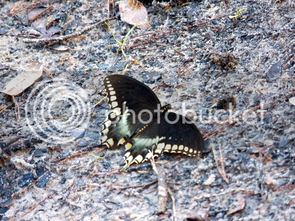 photo butterfly.jpg