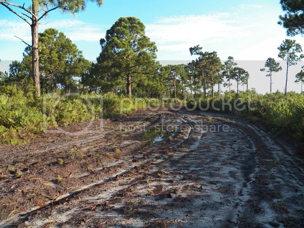 photo wet-dry-cameron-path.jpg