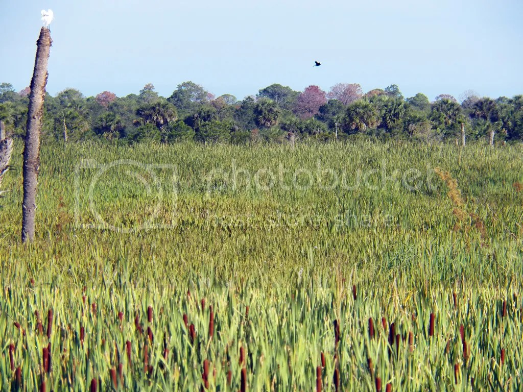 photo wetlands.jpg