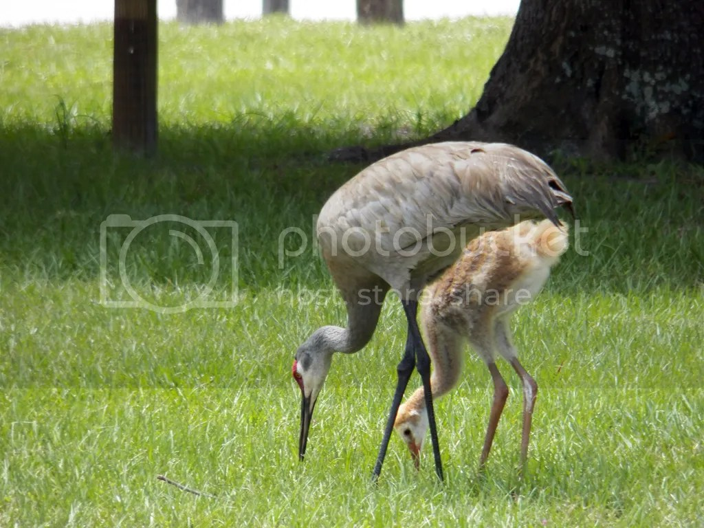 photo cranes.jpg
