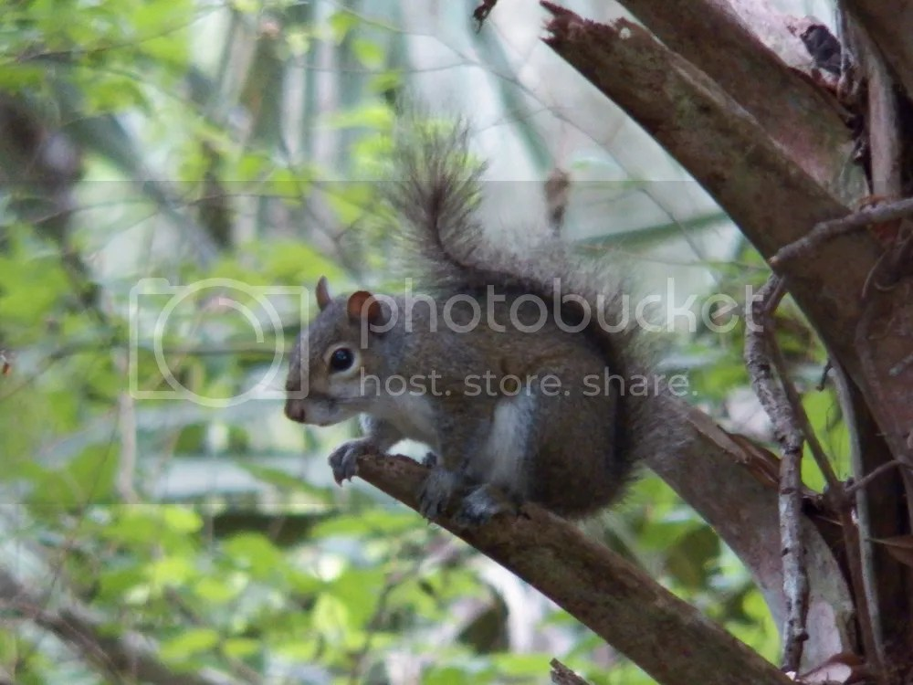 photo squirrel.jpg