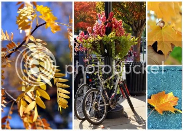 Princeton NJ Fall Foliage
