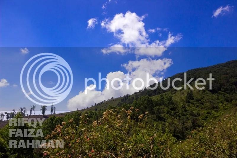 Biru langit dan hijaunya hutan adalah salah satu kombinasi cantik untuk disebut panorama alam