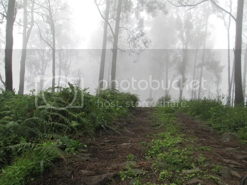 Kabut Alas Lali Jiwo dalam perjalanan turun ke Kokopan. (Diptret oleh Lutfi)