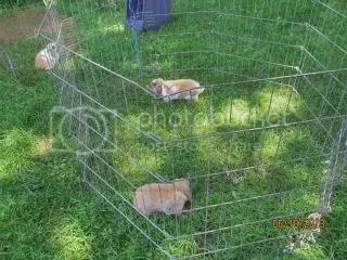 photo Rabbits_zpsec37c6c3.jpg