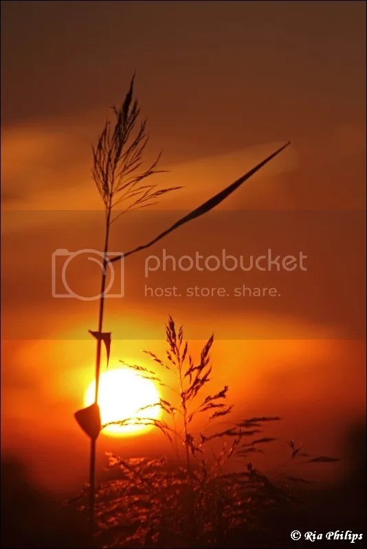 https://i1.wp.com/i83.photobucket.com/albums/j306/bathmen/zonsondergang/IMG_3628.jpg