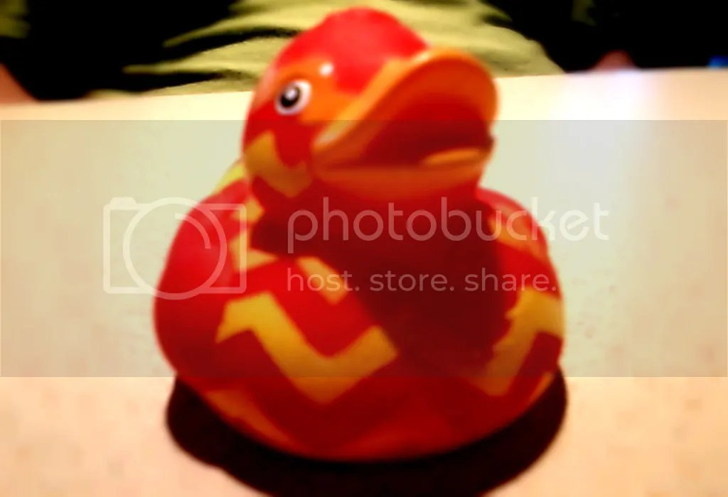 photo Single Duck_zpswad1puph.jpg