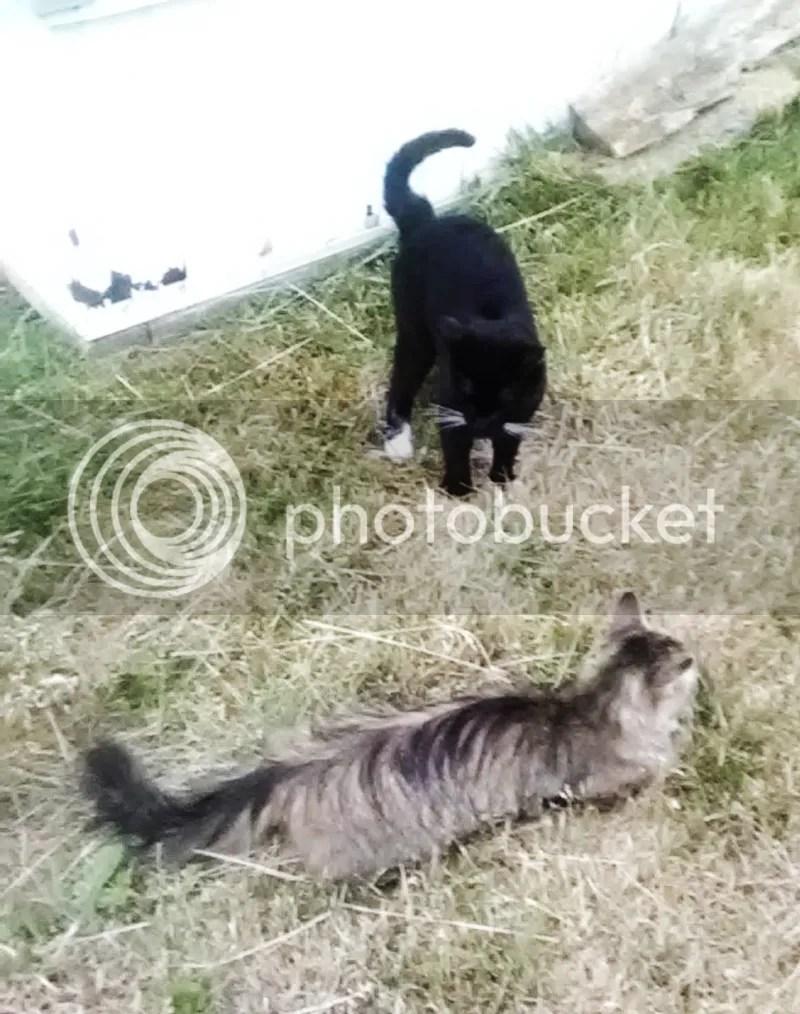 photo cats2_zpsvejmbrp5.jpg
