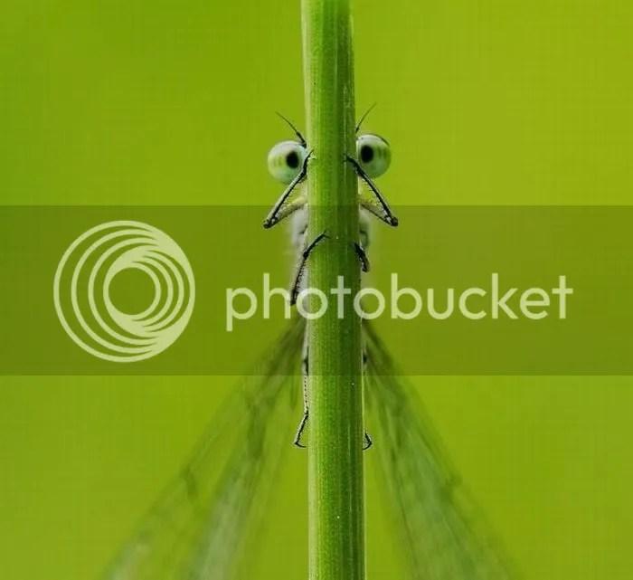 https://i1.wp.com/i834.photobucket.com/albums/zz268/fotoslamenza/Fotos-fds/124/fotopodborka_066.jpg