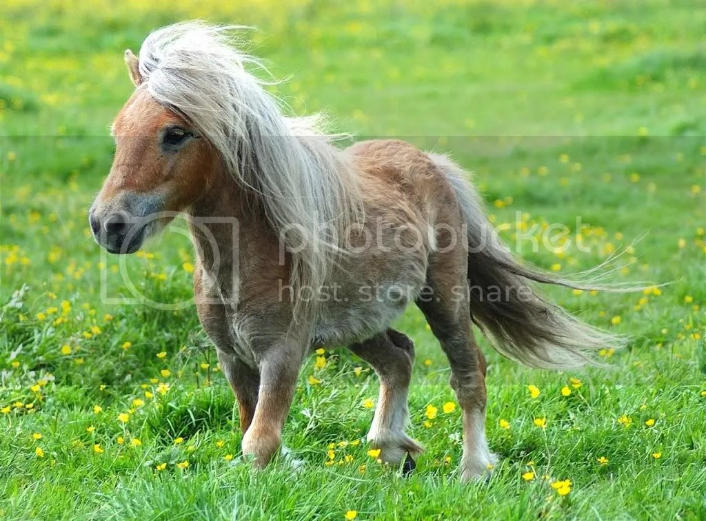 Pony photo: Cute Pony cool-pony.jpg