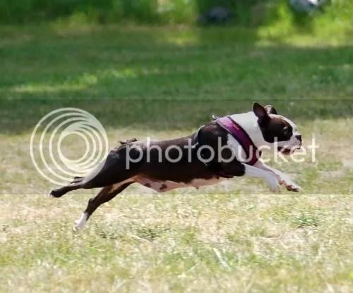 hundesprinten021.jpg