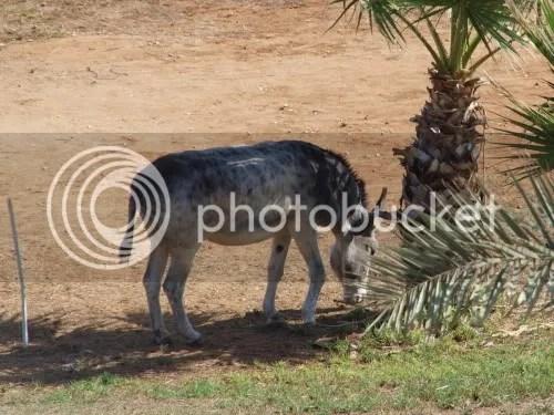 eselet.jpg picture by jeameen