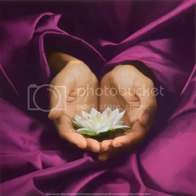 lotus photo: lotus stephane-de-bourgies-offering.jpg