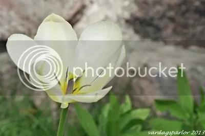 photo DSC_0088_zpsb6a5066e.jpg
