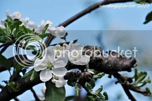photo DSC_0113_zps555245c0.jpg