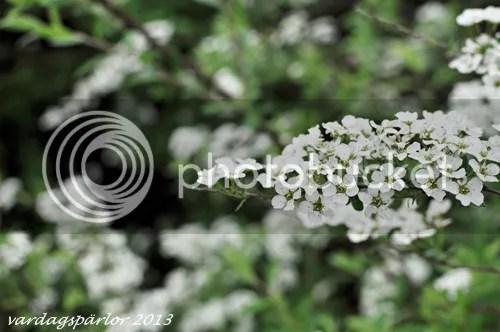 photo blommor_zps0b12f661.jpg