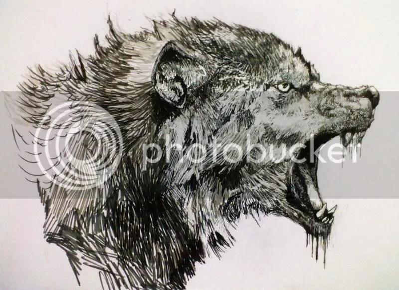 dessin-loup