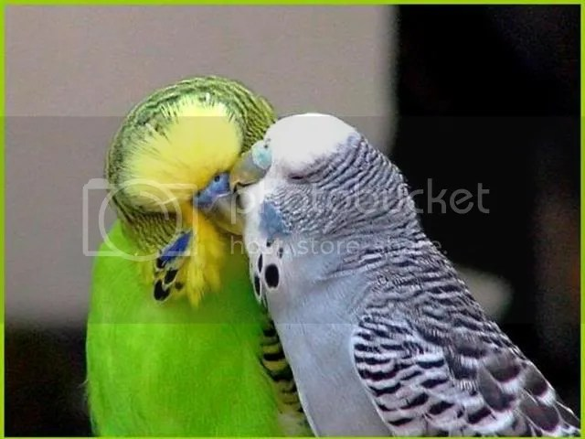 https://i1.wp.com/i86.photobucket.com/albums/k88/suonglam_2006/HV%20Birds%20Love/Slide11.jpg