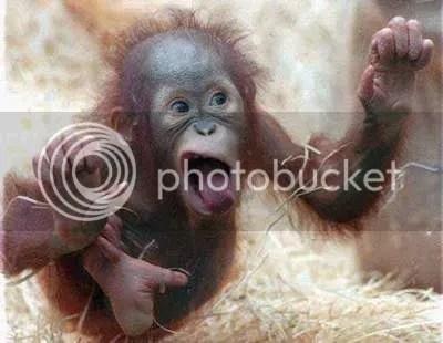 CrazyMonkey.jpg Crazy Monkey image by cullyman07