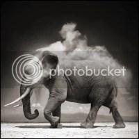 Música para elefantes: mi 2011 en canciones (parte 1)