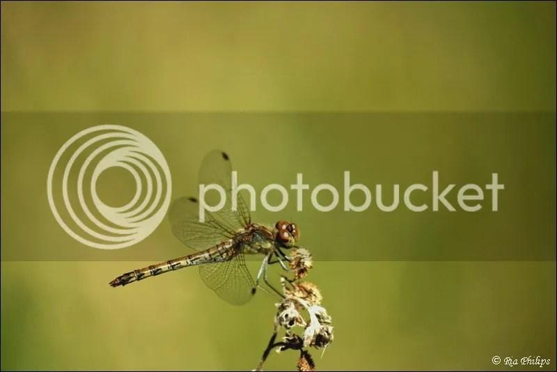 photo IMG_0161.jpg