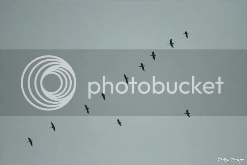 photo IMG_5066.jpg