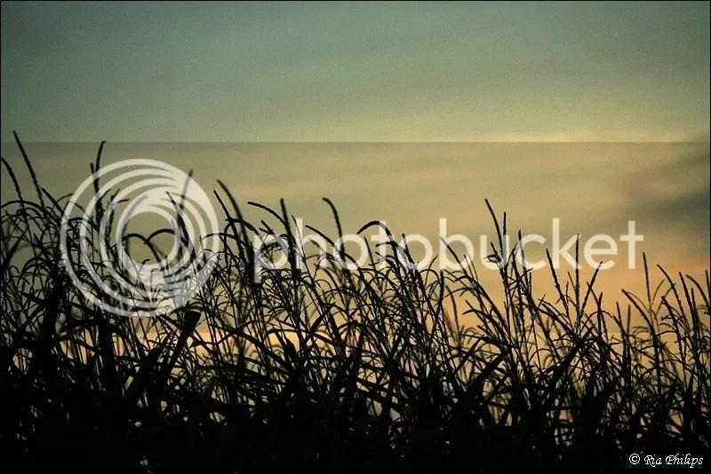 photo IMG_3658.jpg