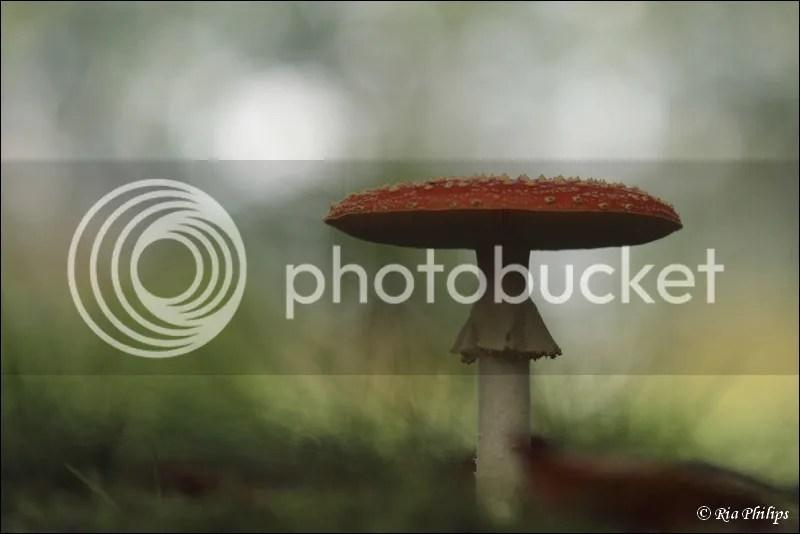 photo IMG_7443.jpg