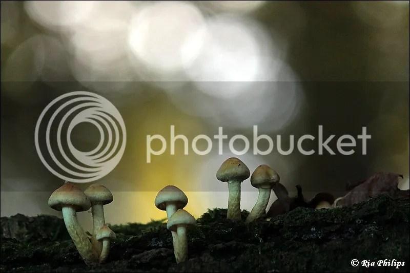 photo IMG_8459.jpg